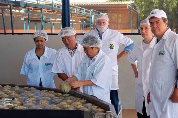 Comitiva chinesa visitou, entre os dias 12 e 17 deste mês, inúmeras fazendas produtoras de melão no Rio Grande do Norte e Ceará