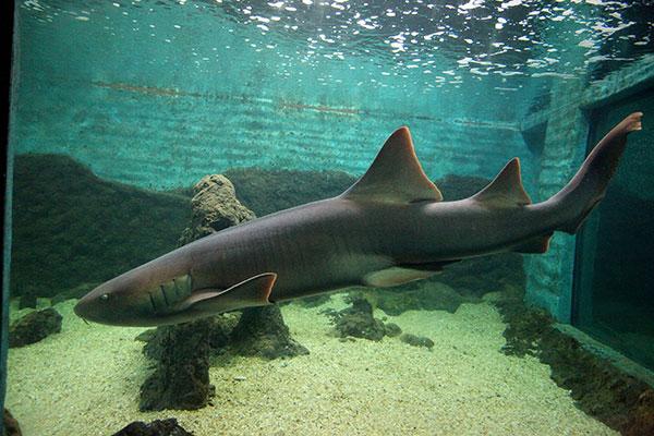 Estudantes e visitantes tem contato com o Tubarão-lixa