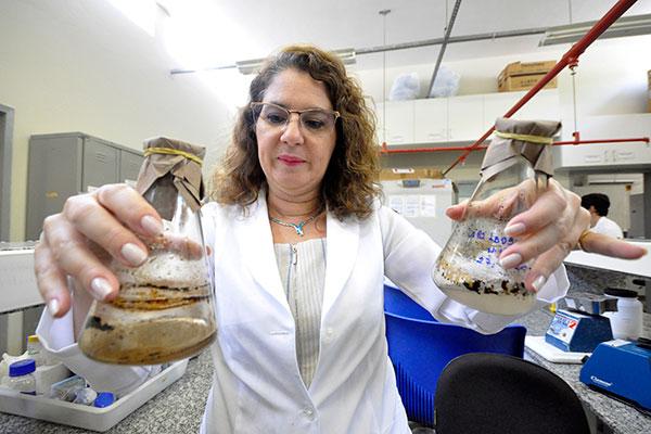 Pesquisa é liderada pela professora titular do Departamento de Biologia Celular e Genética da UFRN, Lucymara Agnez Lima, e foi selecionada pela Capes