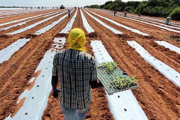 Uma das linhas de financiamento é o FNE Agro Inovação, que possibilita ao produtor agregar novas tecnologias à produção rural