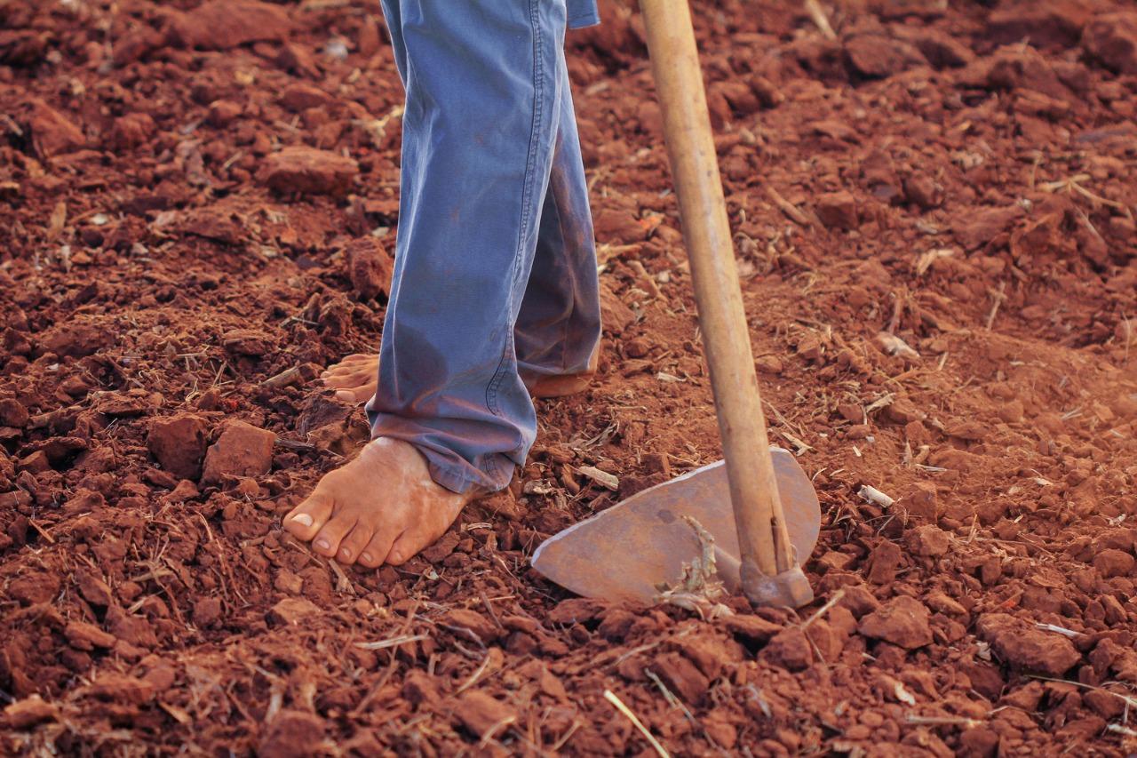 Financiamento vai beneficiar 250 mil famílias de pequenos agricultores