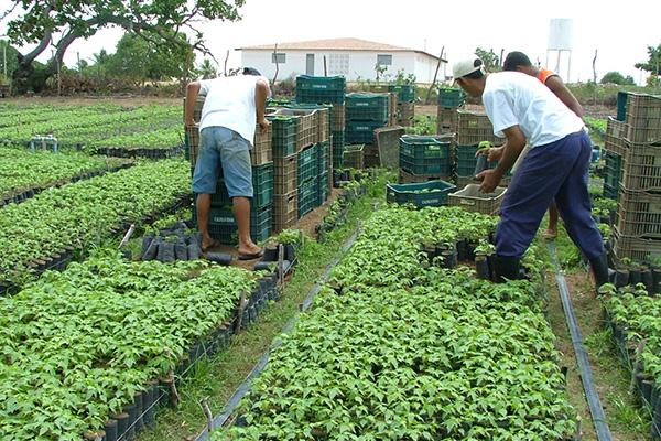 Com a nova lei geral das MPEs, agricultores familiares do Rio Grande do Norte poderão ser beneficiados com a inclusão de sua produção em compras governamentais