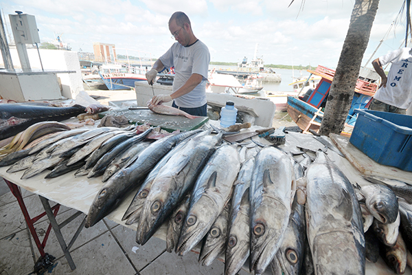 Conforme lei, o pescado poderá constar do cardápio escolar, preferencialmente, duas vezes por semana por ser alimento saudável