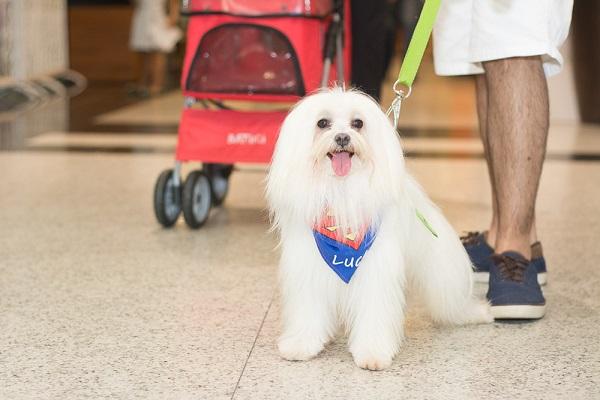 O Natal Shopping recebe famílias cachorros de pequeno porte desde 2014. Agora, o acesso dos pets após reabertura e adequações de biossegurança foi liberada