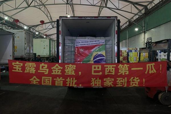 Dia 18 de setembro, três toneladas de melões da empresa Bollo Brasil desembarcaram em Xangai