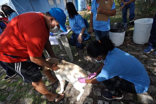 Centenas de animais - cães e gatos - foram vacinados ao longo deste sábado (24) nos 30 pontos de vacinação espalhados em Natal