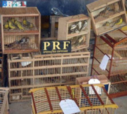 http://arquivos.tribunadonorte.com.br/fotos/25806.jpg