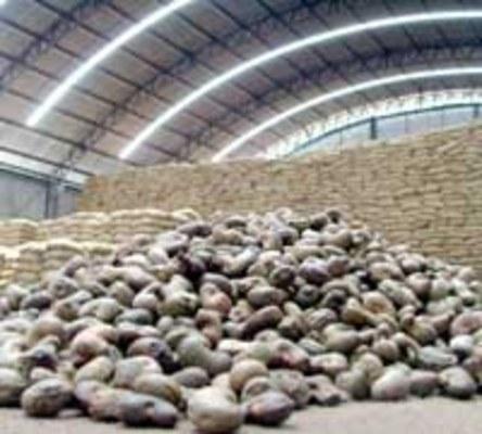 QUEDA - Castanha que chegou a ser comercializada a R$ 1,20 o quilo em 2006, hoje vale R$ 0,90