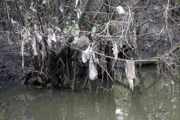 As árvores às margens do rio Potengi parecem enfeitadas para o Natal, só que com lixo