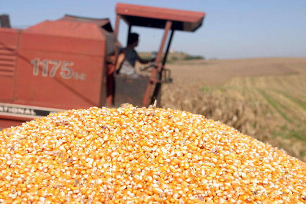 Uso de sementes geneticamente modificadas foi motivo de debate novamente na Câmara