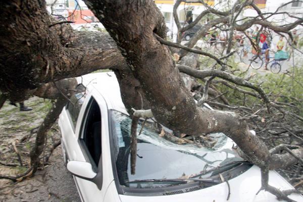 Árvore tomba em cima de carro na Bernardo Vieira