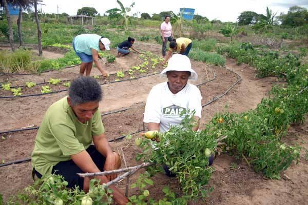 Hortas sem agrotóxico já é uma realidade entre muitos produtores do Rio Grande do Norte. A saúde do consumidor agradece