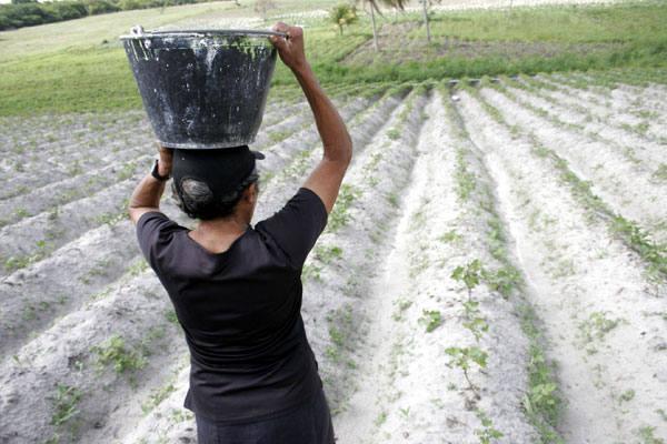 Agricultores que perderam plantações durante o inverno do ano passado estão se agarrando ao seguro-safra para se manterem
