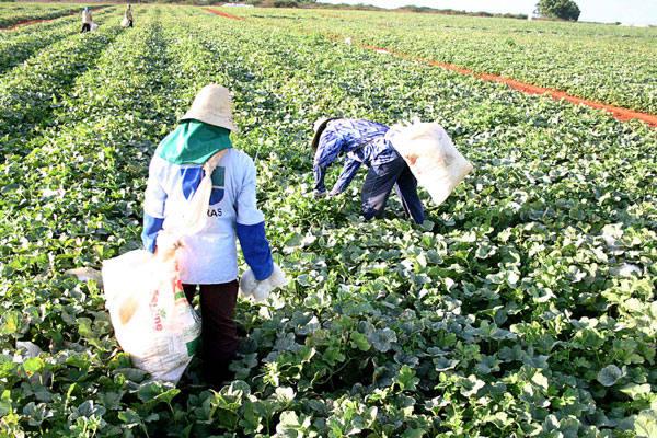 Agricultura foi o setor que mais demitiu em fevereiro, mas deve retomar contratos no segundo semestre