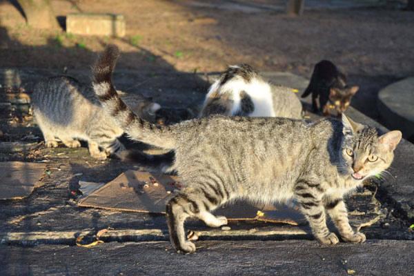 Maior preocupação das autoridades de saúde é com os gatos vadios porque o Centro de Zoonoses não tem estrutura para recolher todos os animais das ruas