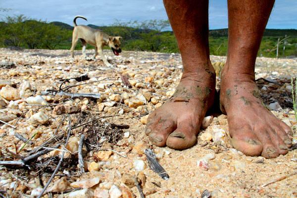 Com as mudanças climáticas esperadas para os próximos 100 anos, espera-se a diminuição das chuvas e o empobrecimento do solo da caatinga