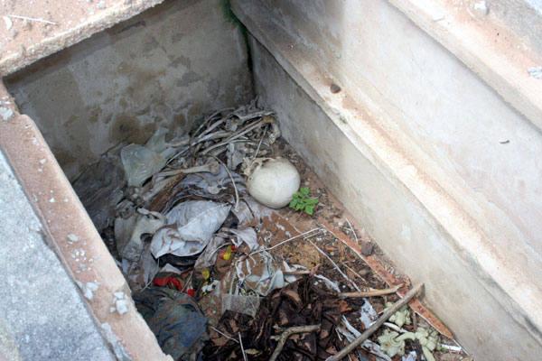 Túmulos sofrem com o descaso no cemitério