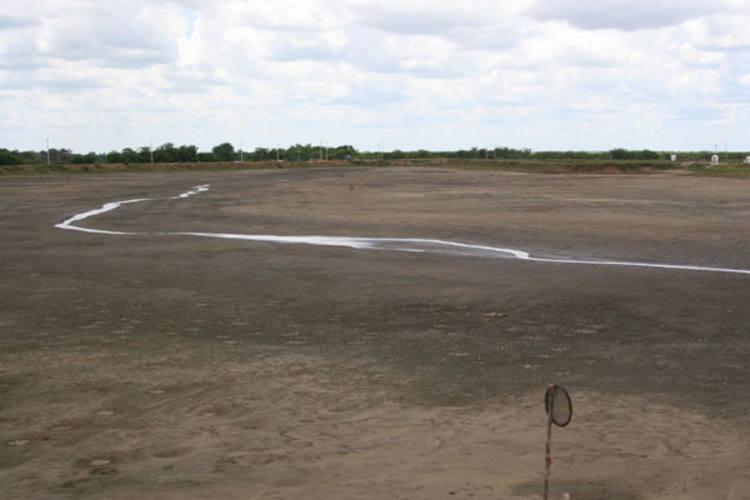 Empresa é dona de 1.000 hectares de viveiros, mas apenas 300 hectares continuam produzindo