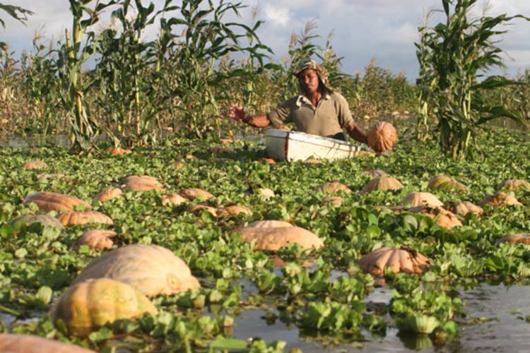"""Agricultores inscritos no """"seguro"""" poderão receber os recursos pagos pelo governo federal"""