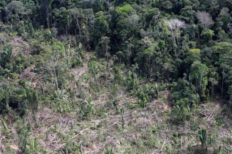 Em um mês, a floresta perdeu 312,6 quilômetros quadrados (km²), desmate 17% maior que o registrado em maio