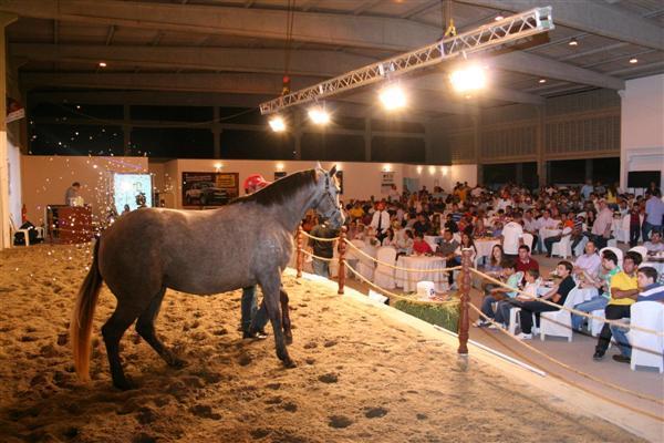 22º Leilão Oficial ANQM na Festa do Boi 2011