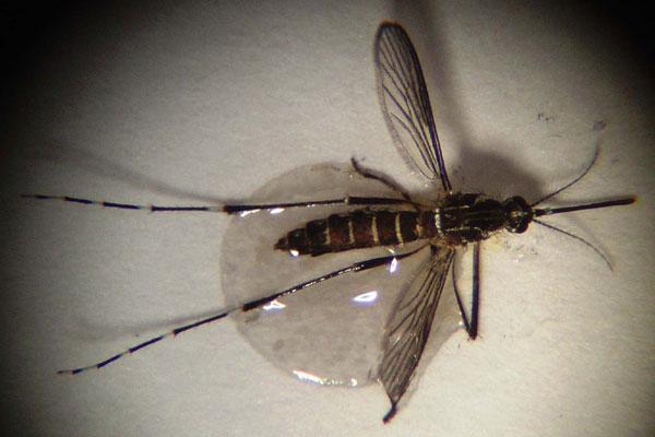 Números da dengue são preocupantes no Rio Grande do Norte