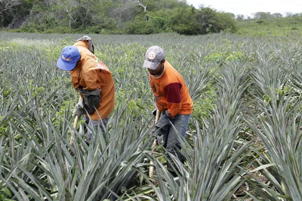 Assistência será voltada a trabalhadores assentados. O objetivo é melhorar as práticas agrícolas no campo