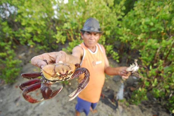 Francisco Canindé da Silva, catador de caranguejo no rio Potengi, afirma que hoje em dia é mais difícil encontrar a espécie