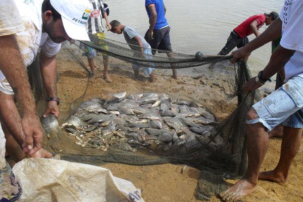 A criação e comercialização de tilápias é destaque entre os produtos vendidos pelos assentamentos do RN