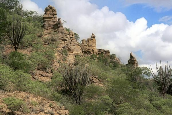 Caatinga, bioma característico do semiárido nordestino, não tem proteção legal como outras matas