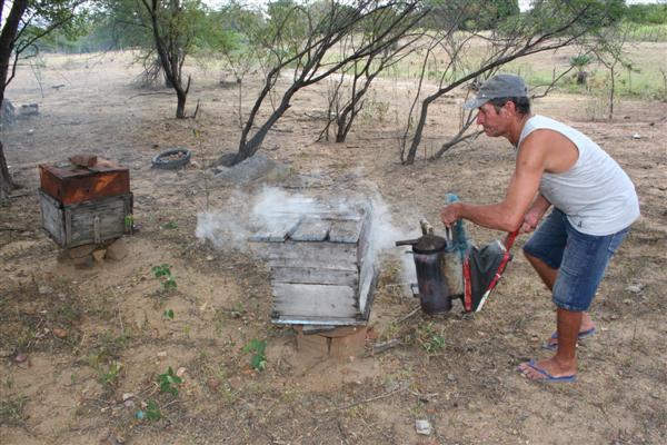 Na comunidade Boi Selado, na falta da água para o plantio, o agricultor Francisco Canindé de Morais, 53 anos, luta com abelhas.