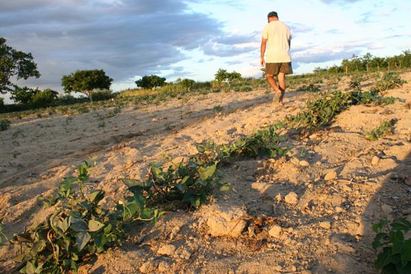 Os 37 mil agricultores com direito ao Garantia-Safra no RN, esperam que as prefeituras consigam vencer os entraves burocráticos