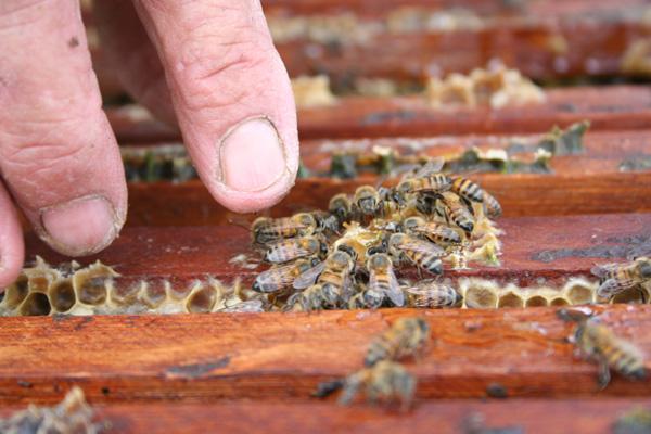 Por meio de capacitação, assentados profissionalizaram criação de abelhas no RN e colhem resultados