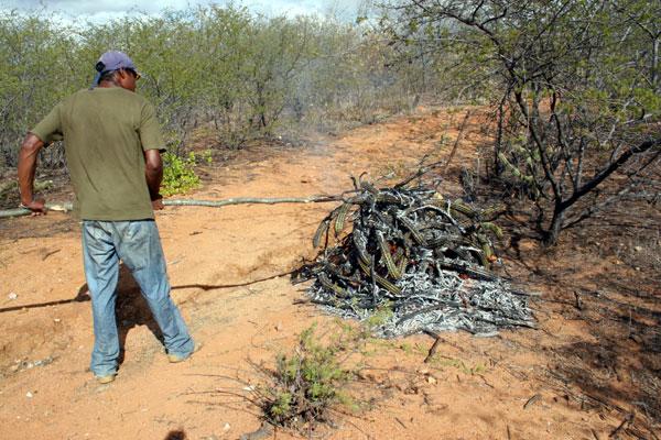 Esta já é considerada a pior seca dos últimos 30 anos